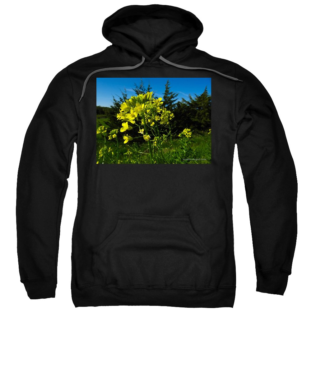 Flower Sweatshirt featuring the photograph Yellow Against Blue by Lisa Phillips
