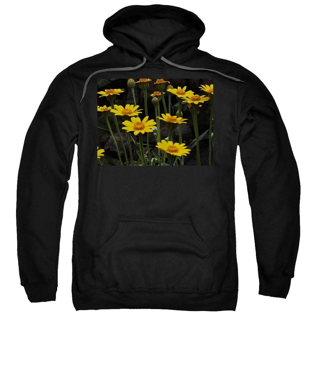 Yellow Sweatshirt featuring the photograph Yellow Daisies by Sara Stevenson