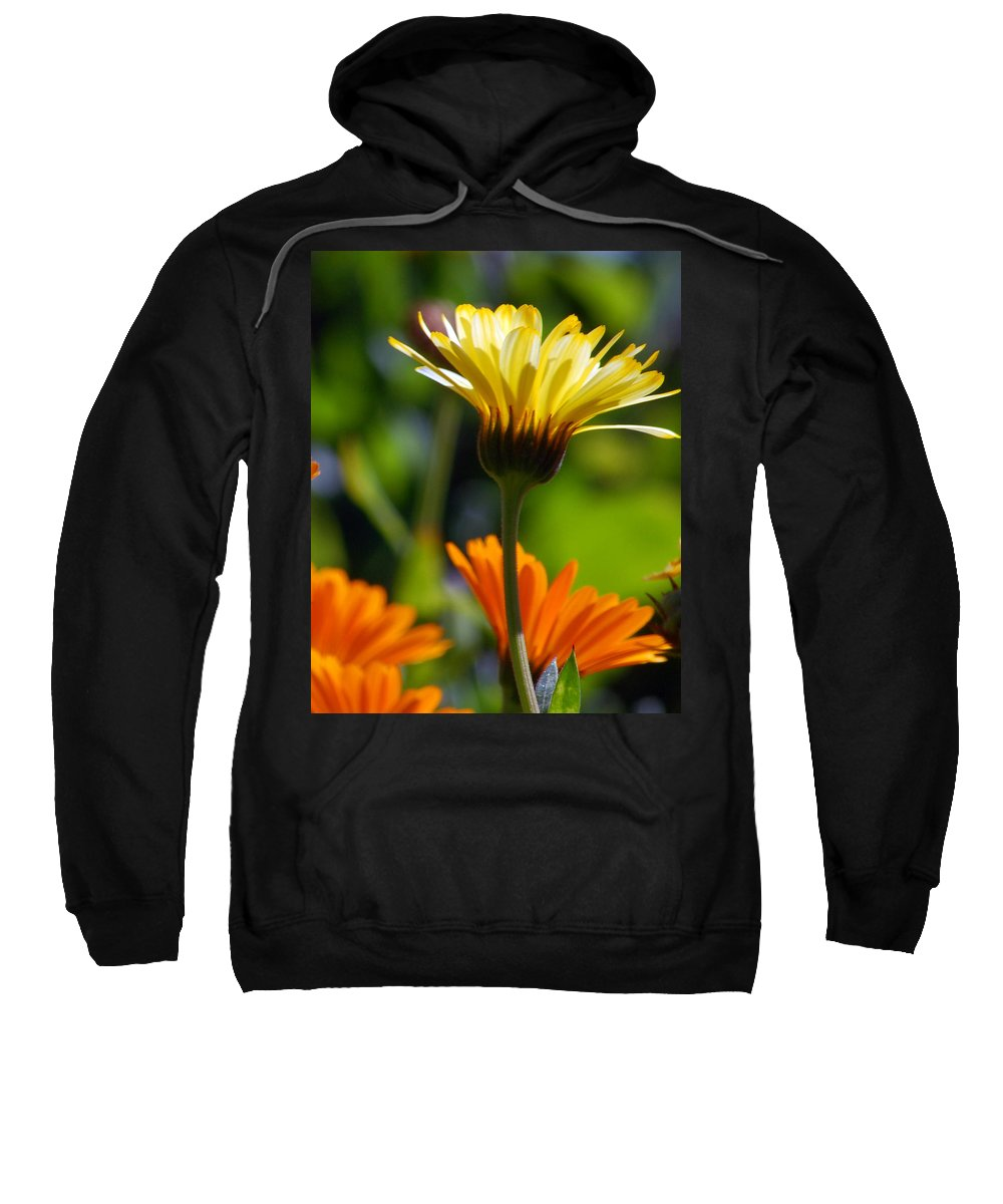 Daisy Sweatshirt featuring the photograph Yellow Daisy by Amy Fose