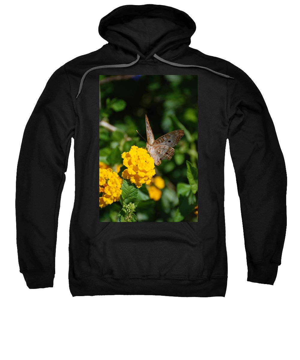 Butterfly Sweatshirt featuring the photograph Yellow Flower Brown Fly by Rob Hans