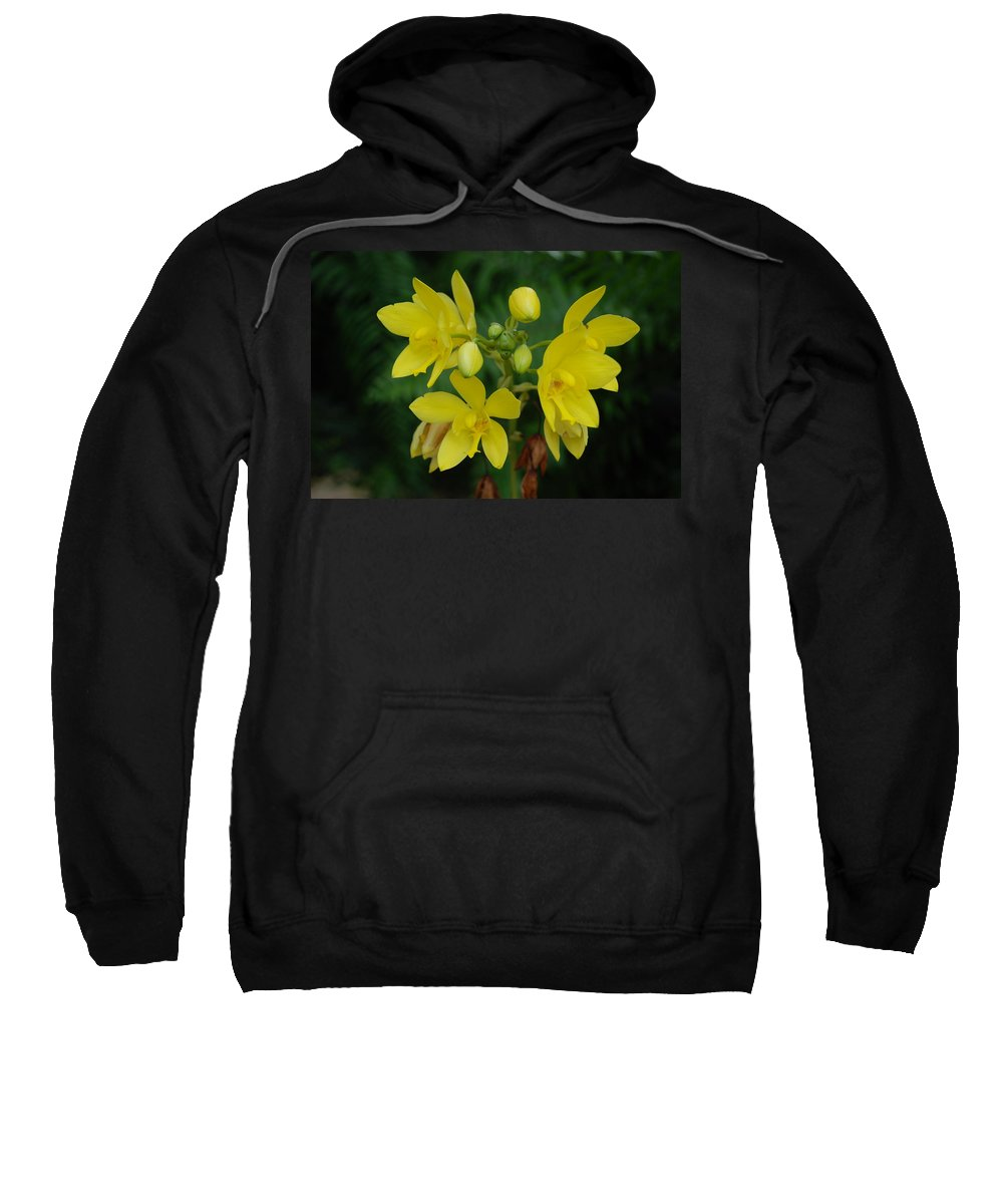 Macro Sweatshirt featuring the photograph Yellow Flower by Rob Hans