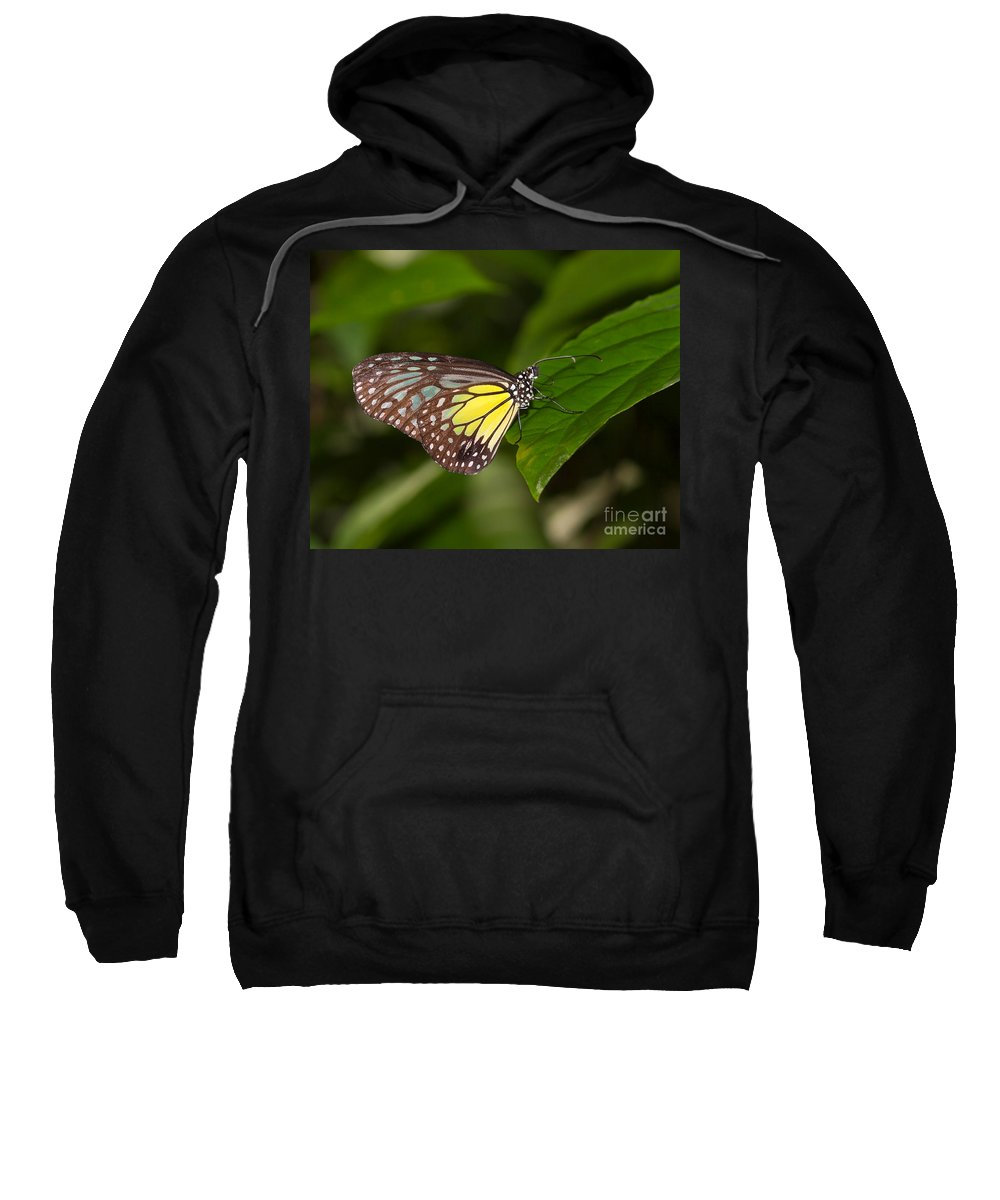 Butterfly Sweatshirt featuring the photograph Yellow Glassy Tiger Butterfly by Louise Heusinkveld