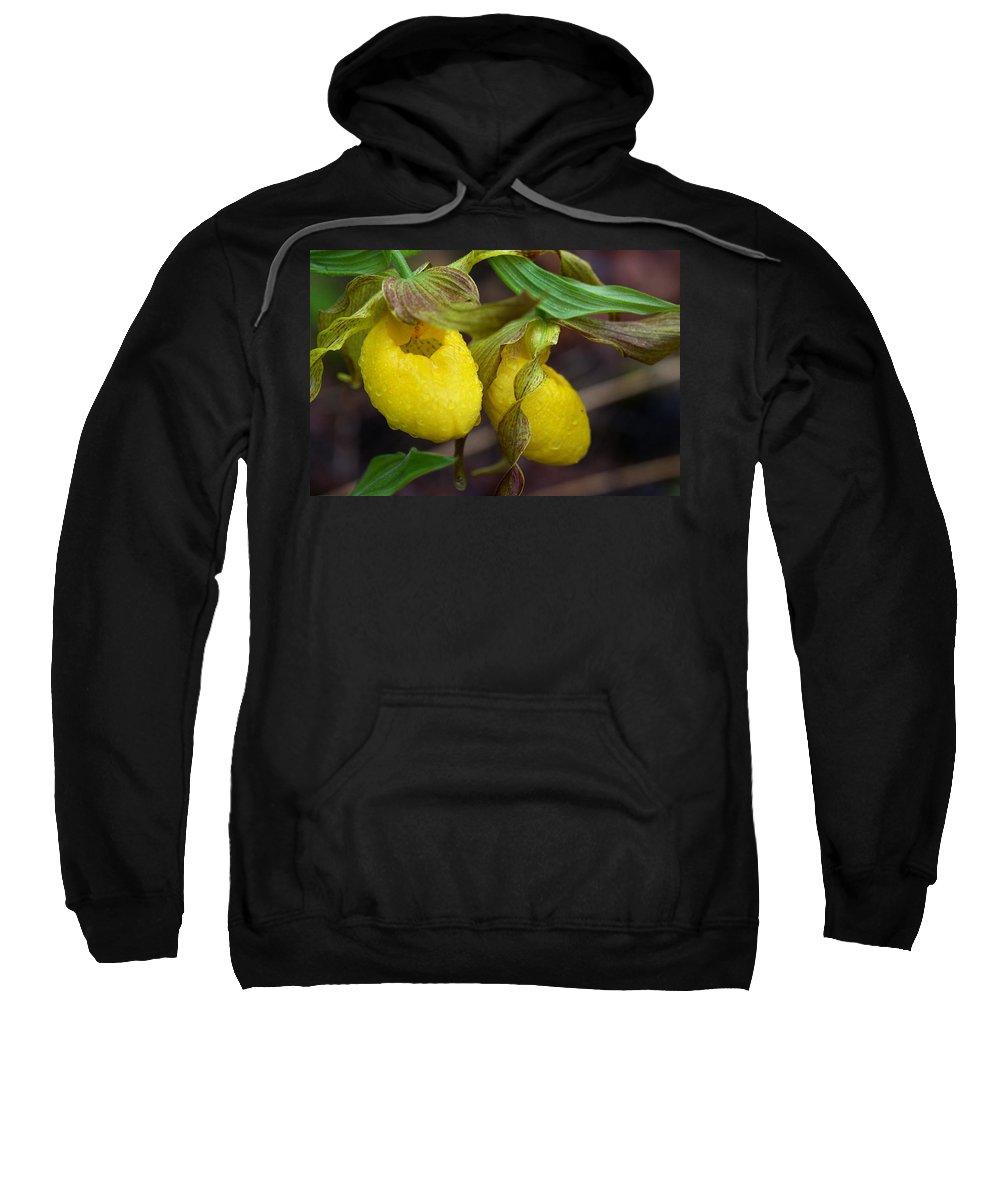 Beautiful Sweatshirt featuring the photograph Yellow Lady's Slipper by Jack R Perry