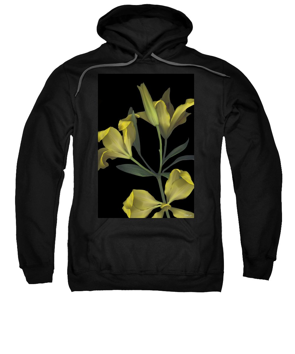 Tiger Lily Lilly Yellow Flower Plant Stem Leaf Leaves Petal Bow Bouquet Black Green Happy Bright Floral Gift Sweatshirt featuring the photograph Yellow Lily On Black by Heather Kirk