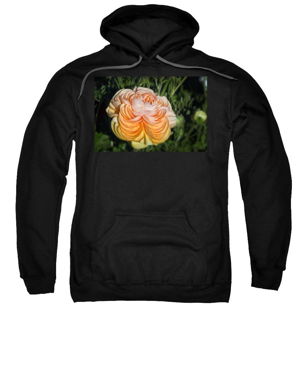 Flower Sweatshirt featuring the photograph Yellow Ranunculus by Joan Carroll