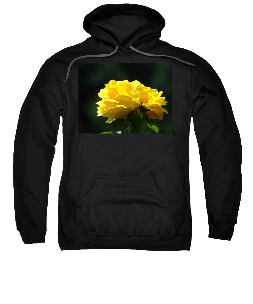 Rose Sweatshirt featuring the photograph Yellow Rose Sunlit Rose Garden Landscape Art Baslee Troutman by Baslee Troutman
