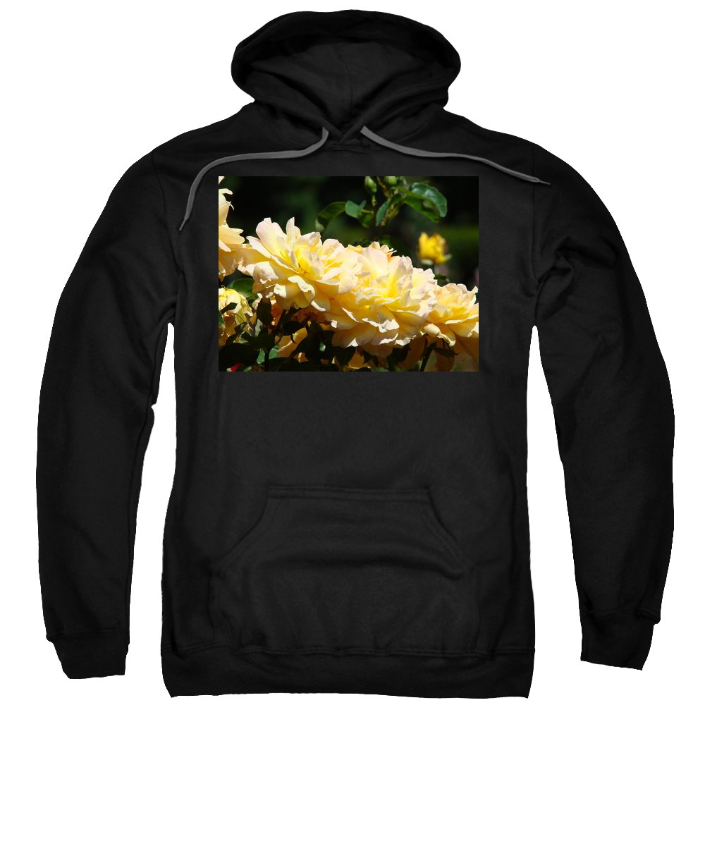 Rose Sweatshirt featuring the photograph Yellow Roses Sunlit Rose Flowers 1 Rose Garden Giclee Artwork Baslee Troutman by Baslee Troutman