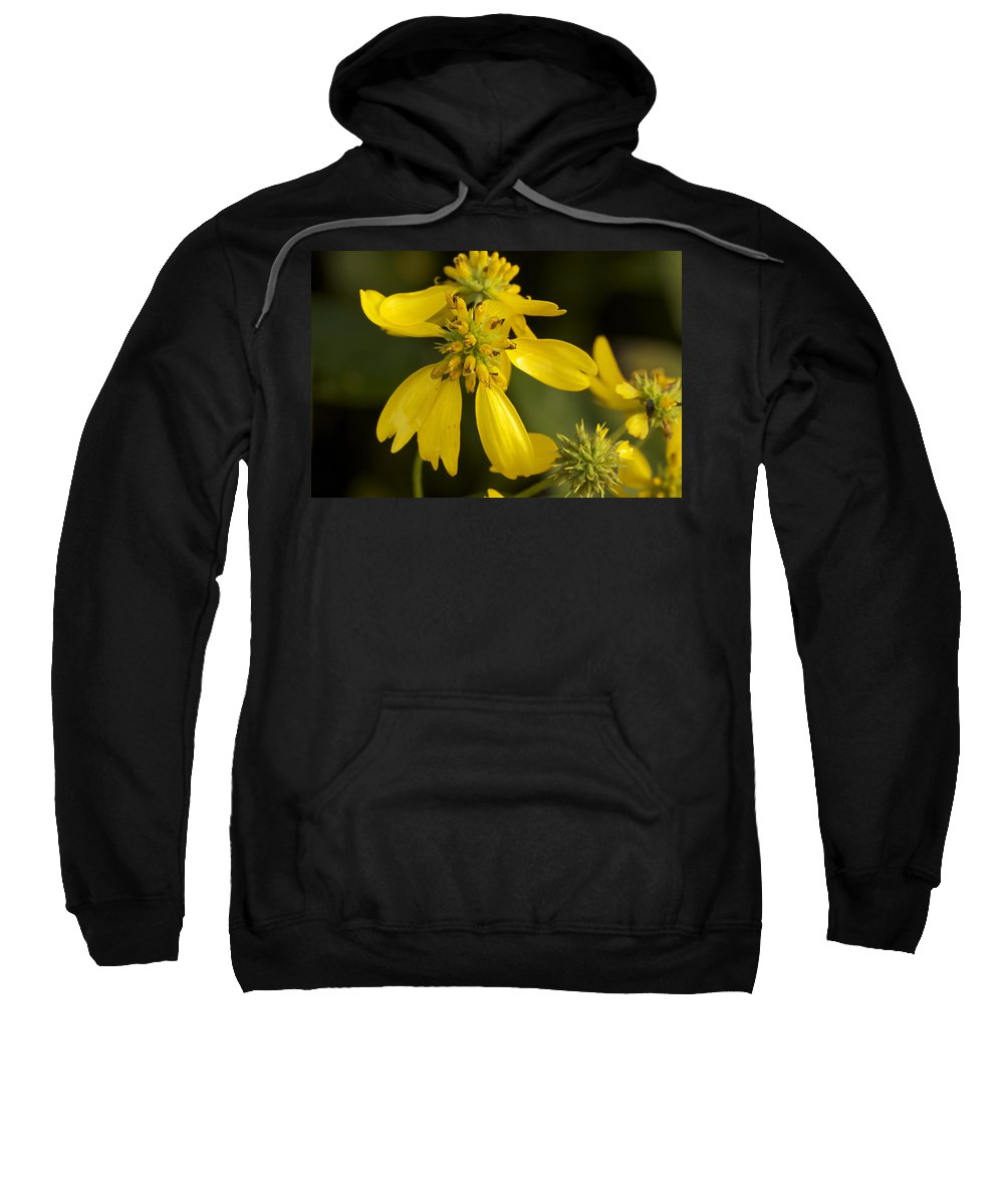 Wing Sweatshirt featuring the photograph Yellow Wingstem by Jack R Perry