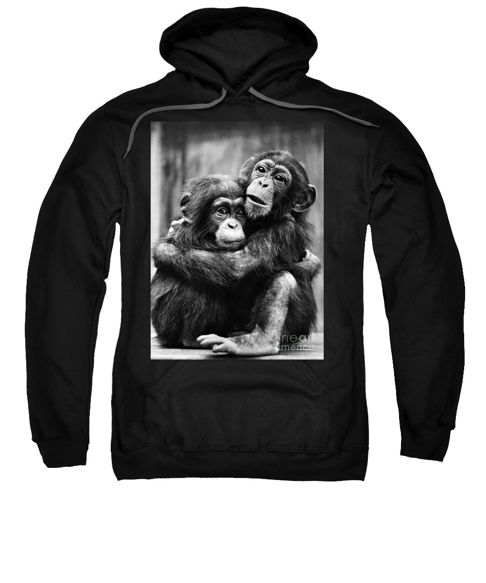 20th Century Sweatshirt featuring the photograph Young Chimpanzees by Granger
