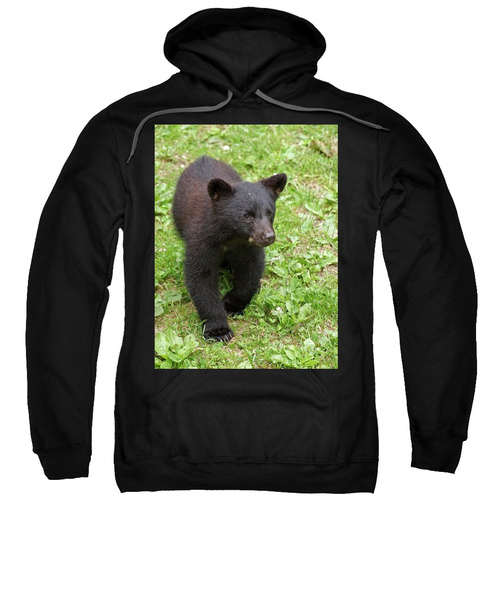 Black Bear Sweatshirt featuring the photograph Young Cub by Inge Riis McDonald