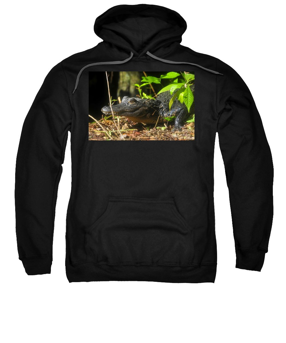 Alligator Sweatshirt featuring the photograph Young Gator by David Lee Thompson