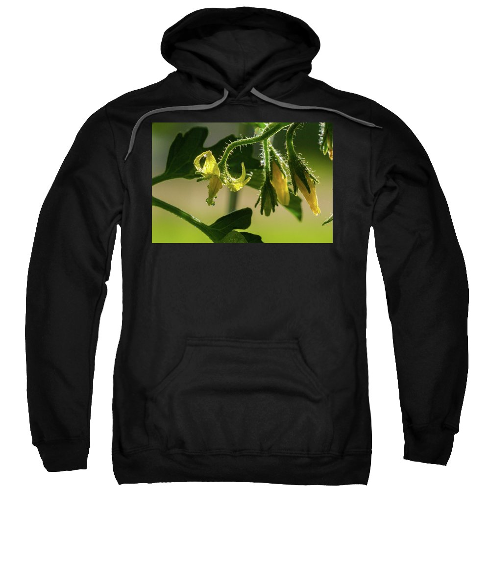 2016 Sweatshirt featuring the photograph Your Next Tomatoes by Mark Salamon