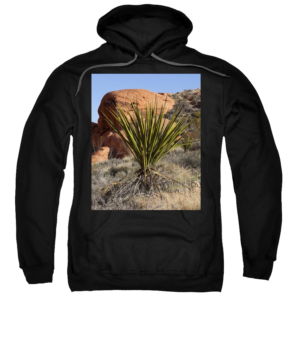 Yucca Plant Sweatshirt featuring the photograph Yucca Four by Kelley King