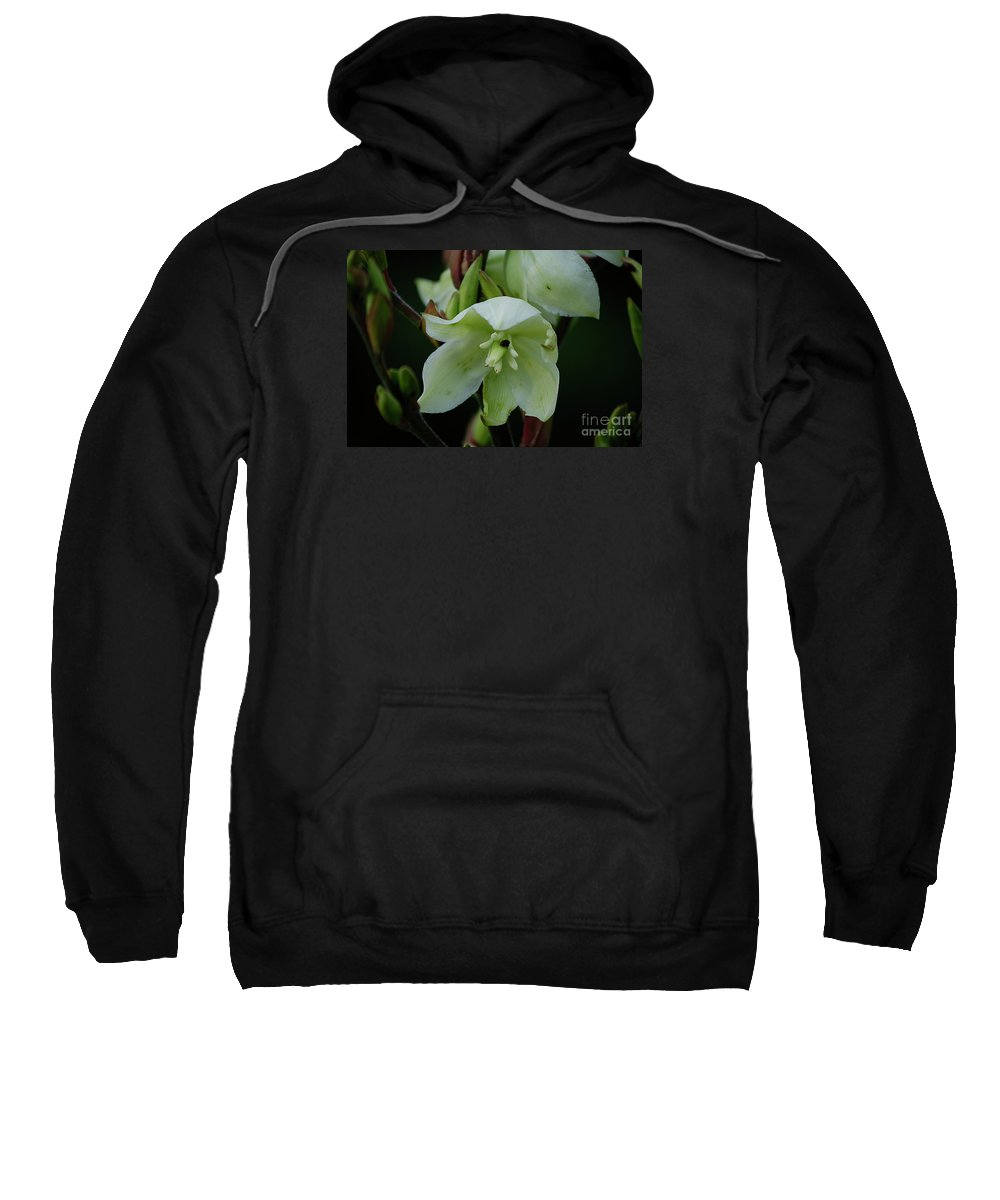 White Flowers Sweatshirt featuring the photograph Yucca by Randy Bodkins