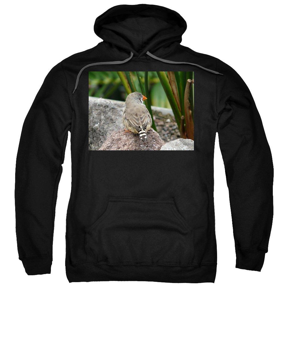Bird Sweatshirt featuring the photograph Zebra Finch by Valerie Ornstein