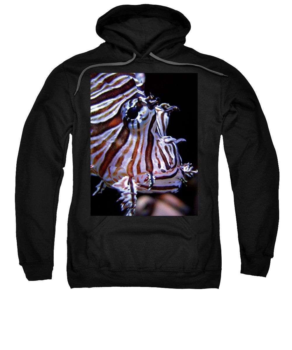 Fish Sweatshirt featuring the photograph Zebra Fish by Denise Keegan Frawley