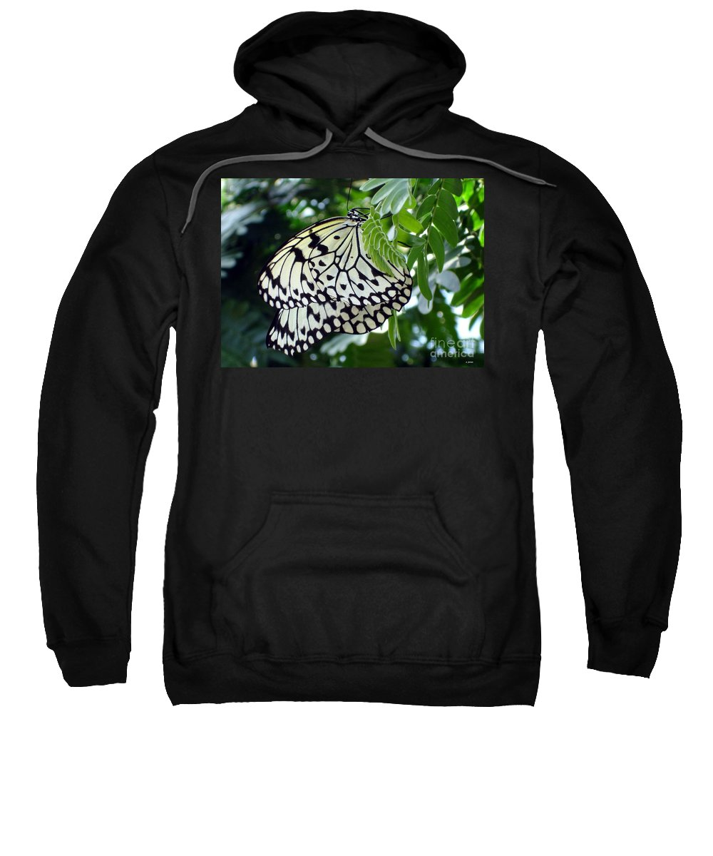 Butterfly Sweatshirt featuring the photograph Zebra In Disguise by Shelley Jones