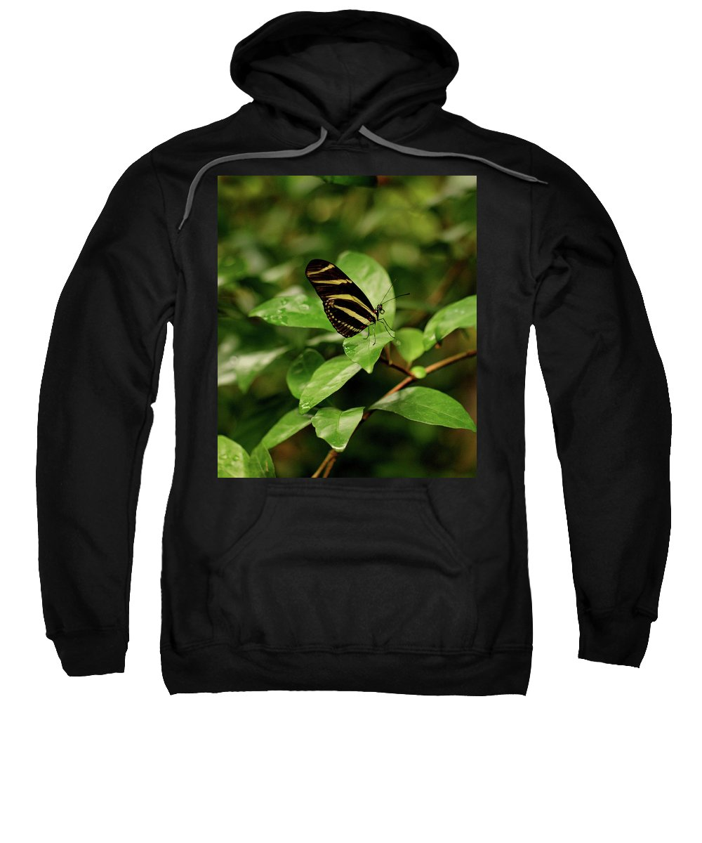 Butterfly Sweatshirt featuring the photograph Zebra Longwing Butterfly by Sandy Keeton