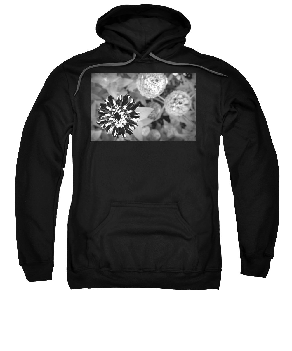 Black And White Sweatshirt featuring the photograph Zinnia In Black And White by Lois Braun