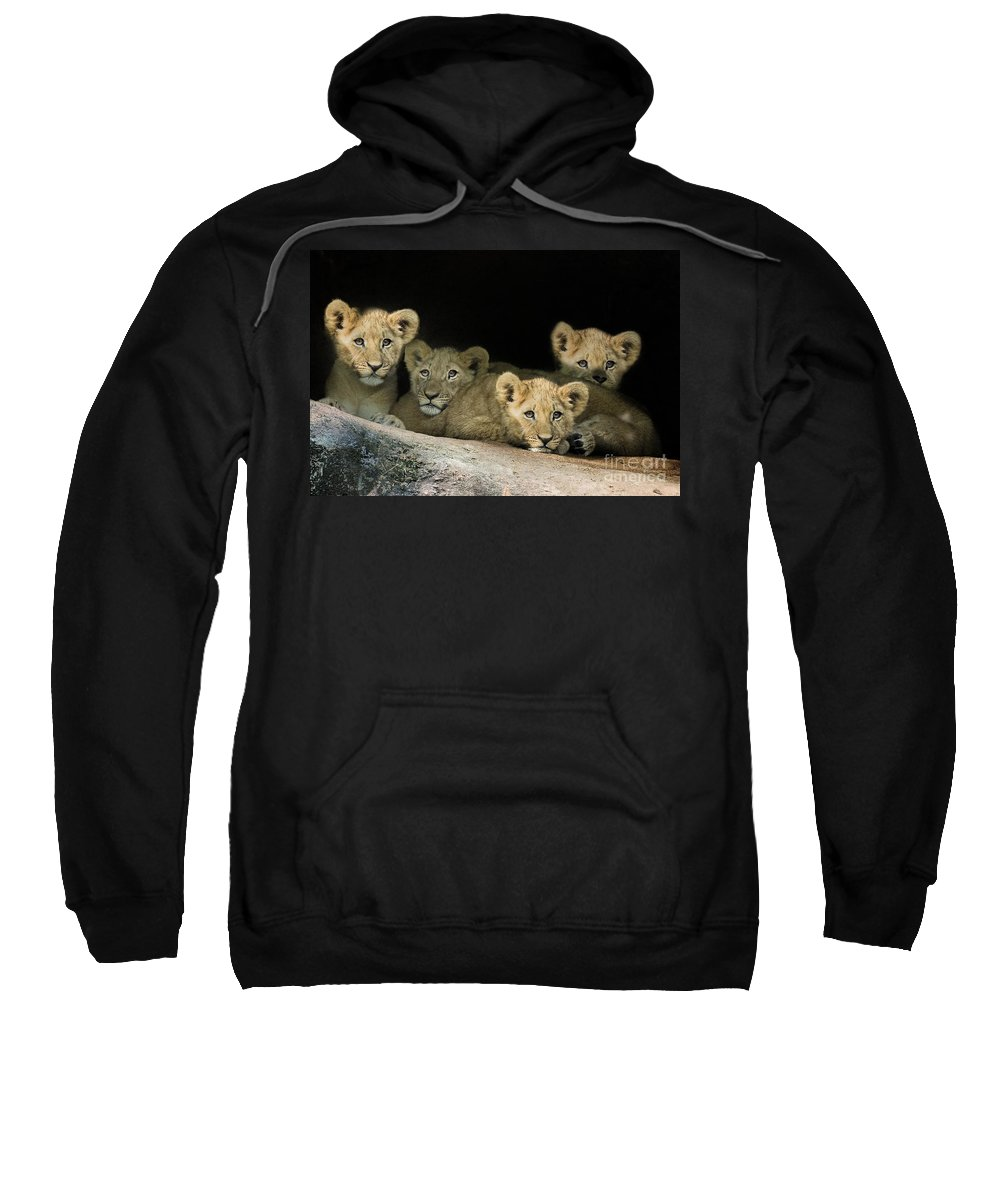 Zoo Sweatshirt featuring the photograph Four Cubs by Linda D Lester