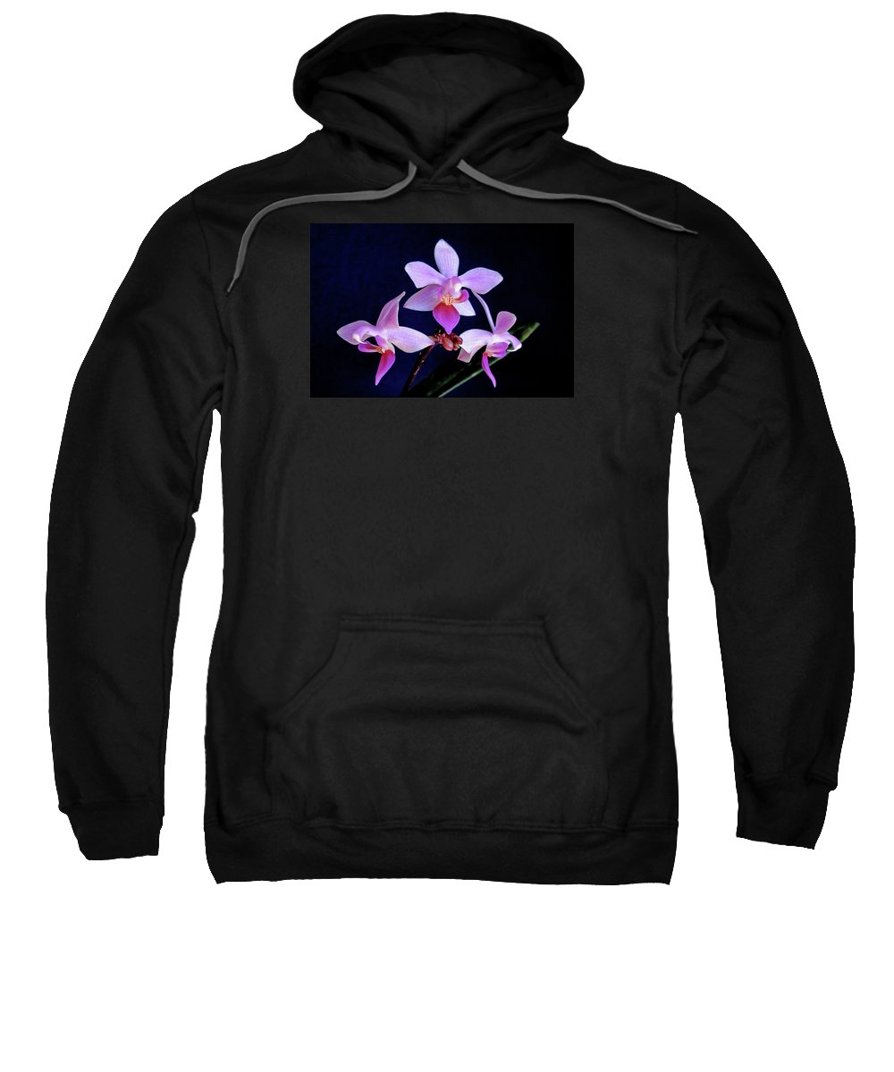 Orchids Sweatshirt featuring the photograph Orchid Ballet by Bill Morgenstern