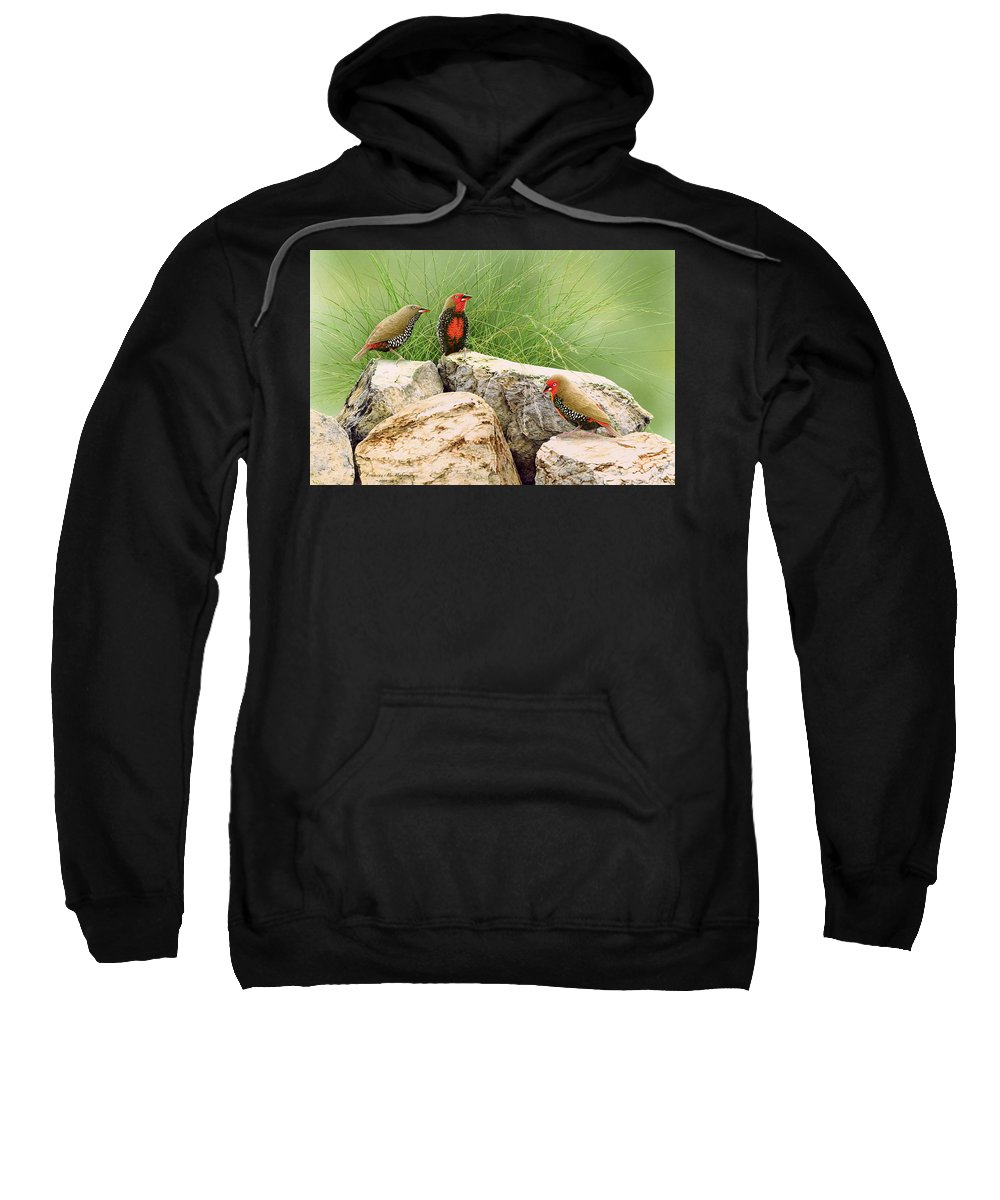 Bird Sweatshirt featuring the painting Rock Stars - Painted Finches by Frances McMahon