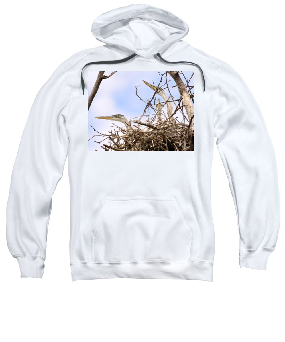 Blue Heron Sweatshirt featuring the photograph Blue Heron Rookery 7214 by Bonfire Photography
