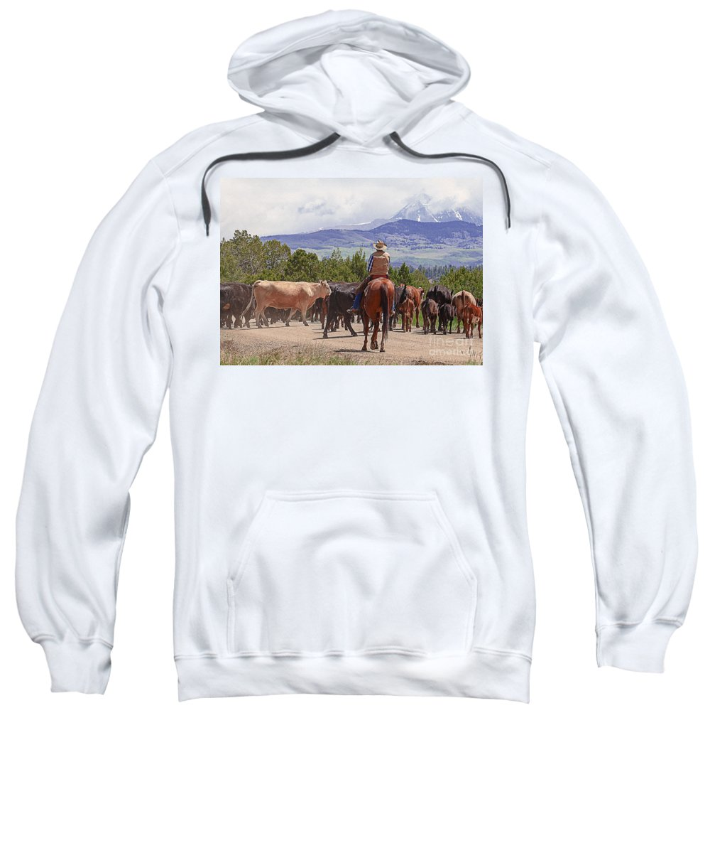 Cow Sweatshirt featuring the photograph Colorado Cowboy Cattle Drive by Janice Pariza