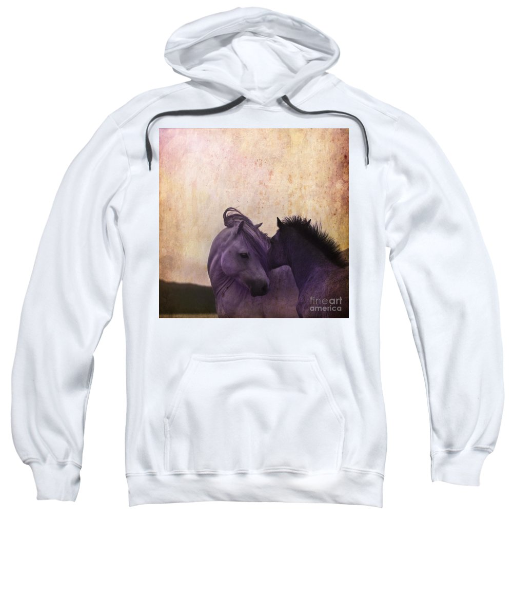 Horse Sweatshirt featuring the photograph Cuddle Me by Angel Ciesniarska