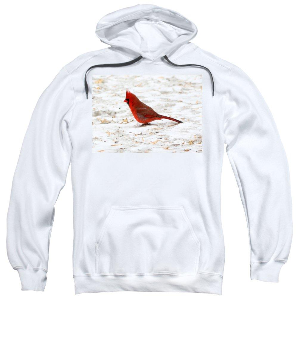 Northern Cardinal Sweatshirt featuring the photograph Northern Cardinal by Lori Tordsen