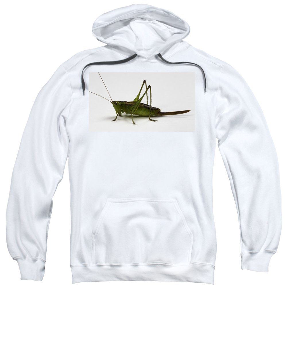 Bug Sweatshirt featuring the photograph Short-winged Meadow Katydid by Terry Leasa