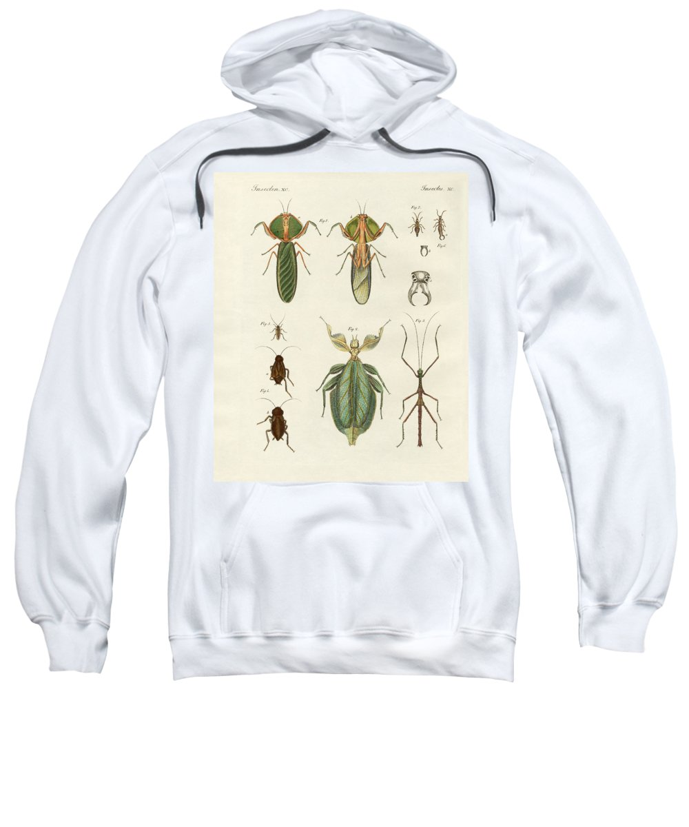 Bertuch Sweatshirt featuring the drawing Strange Insects by Splendid Art Prints