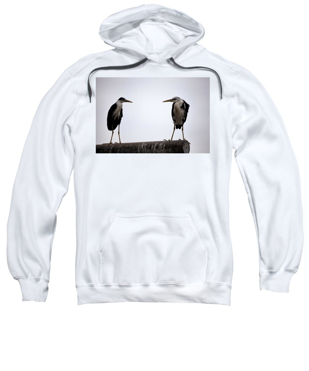 Pied Heron Sweatshirt featuring the photograph Two Of A Different Kind by Douglas Barnard