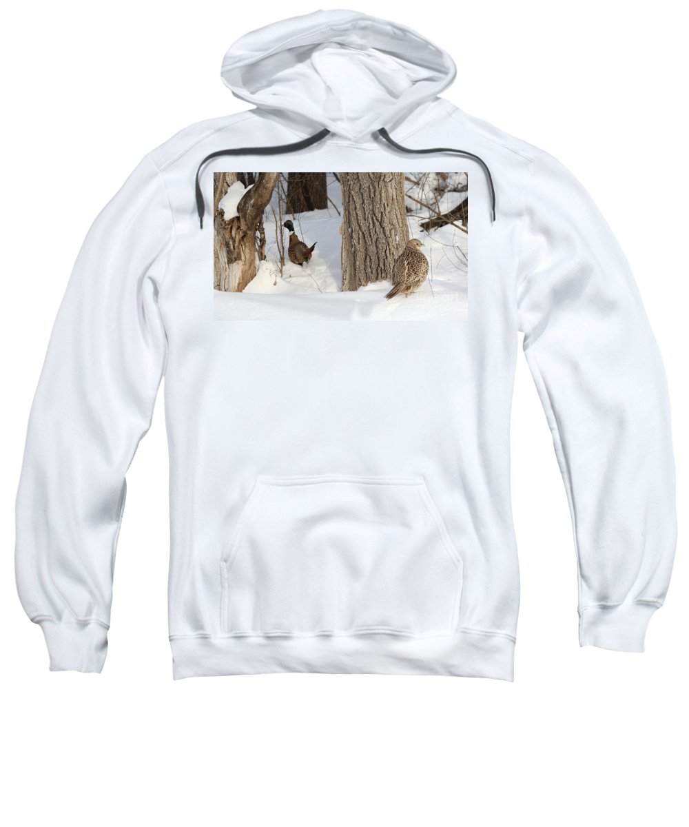 Pheasant Sweatshirt featuring the photograph Undercover by Lori Tordsen