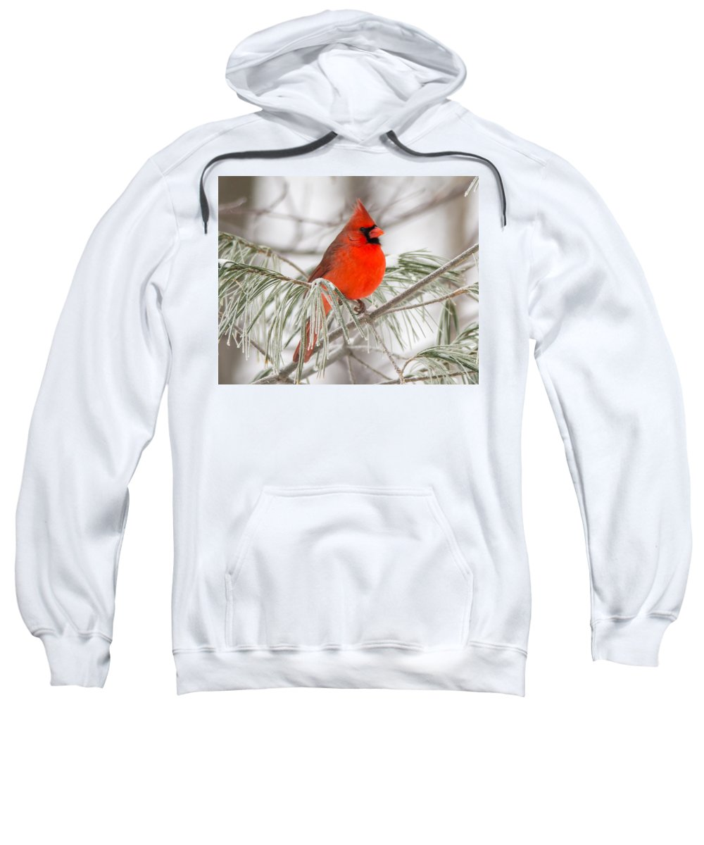 Bird Sweatshirt featuring the photograph Winter Cardinal by Richard Kitchen