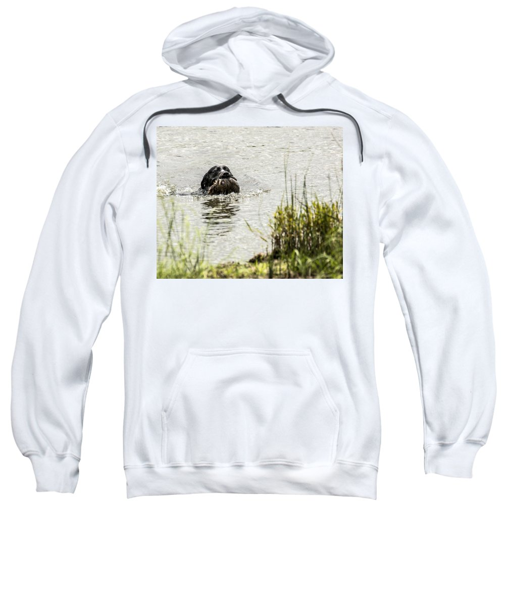 Ukc Hunt Test Sweatshirt featuring the photograph Labrador Retriever by Steven Clair