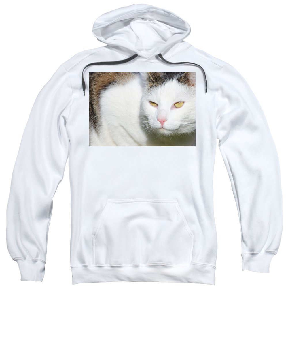 Cat Sweatshirt featuring the photograph cat by Heike Hultsch