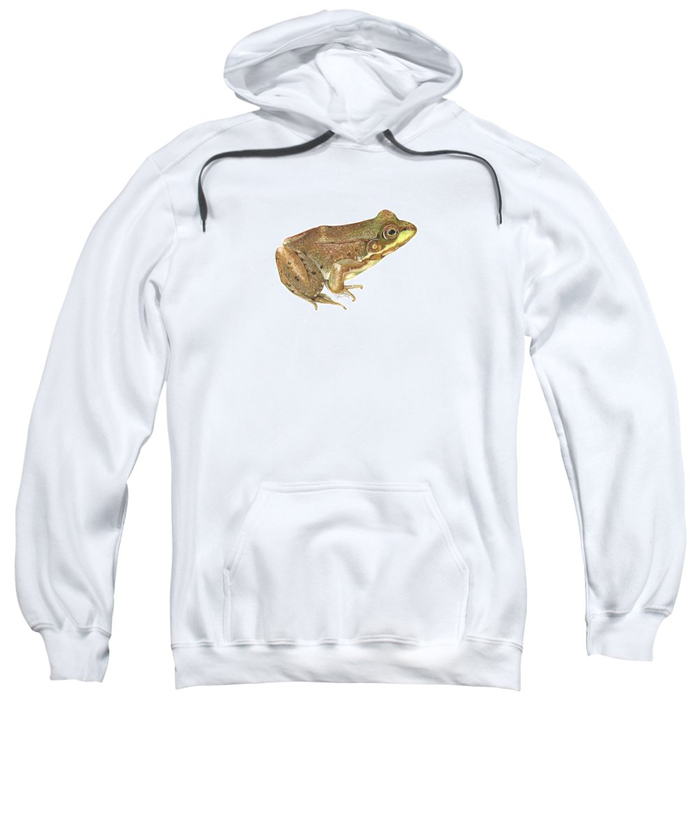 Frog Sweatshirt featuring the painting Green Frog by Cindy Hitchcock