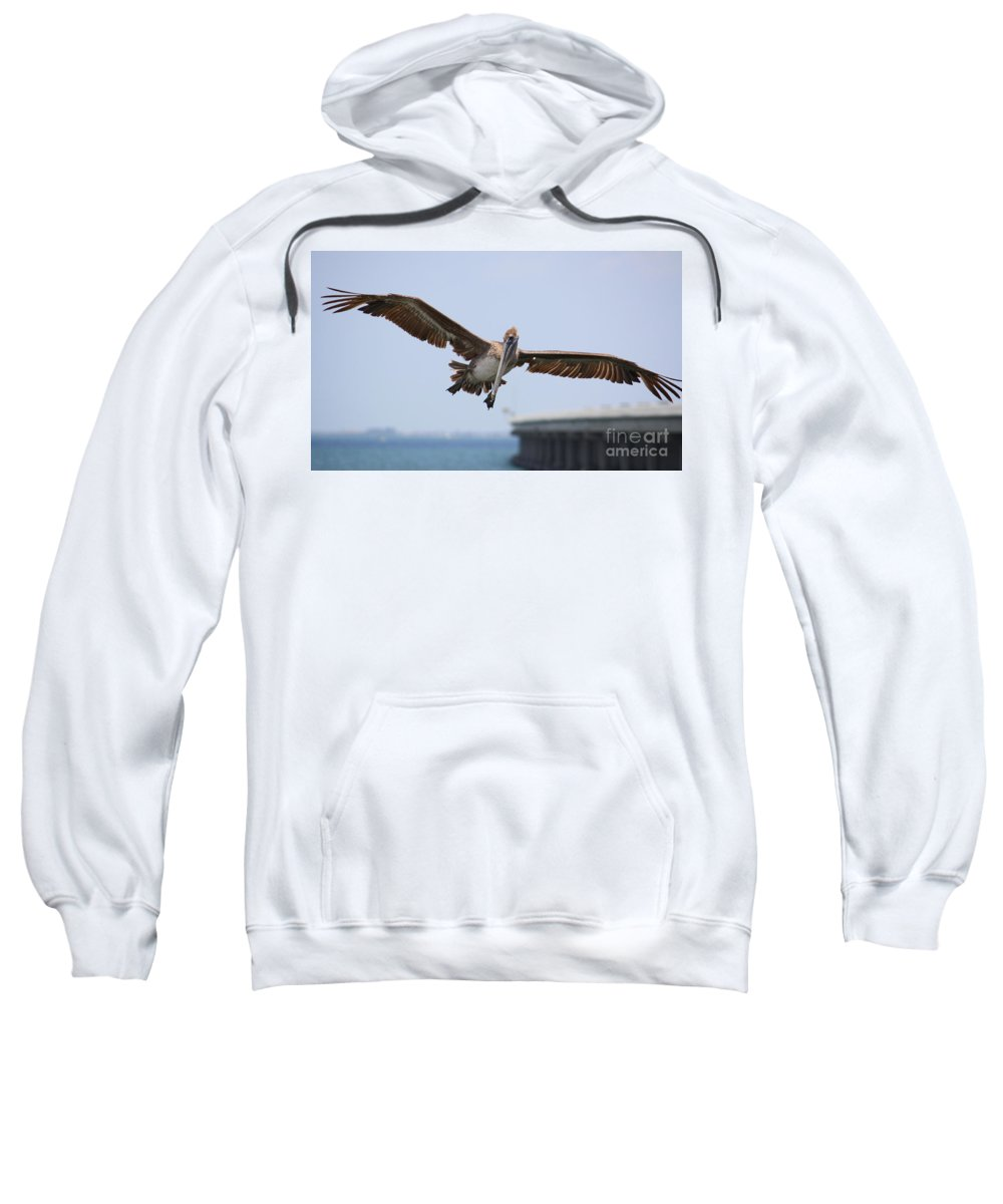 Pelican Sweatshirt featuring the photograph Incoming Pelican by Carol Groenen