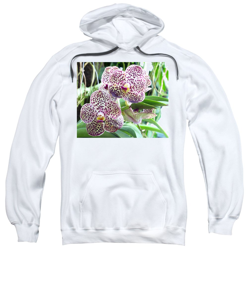 Orchid Sweatshirt featuring the photograph Orchid by Paul Fell