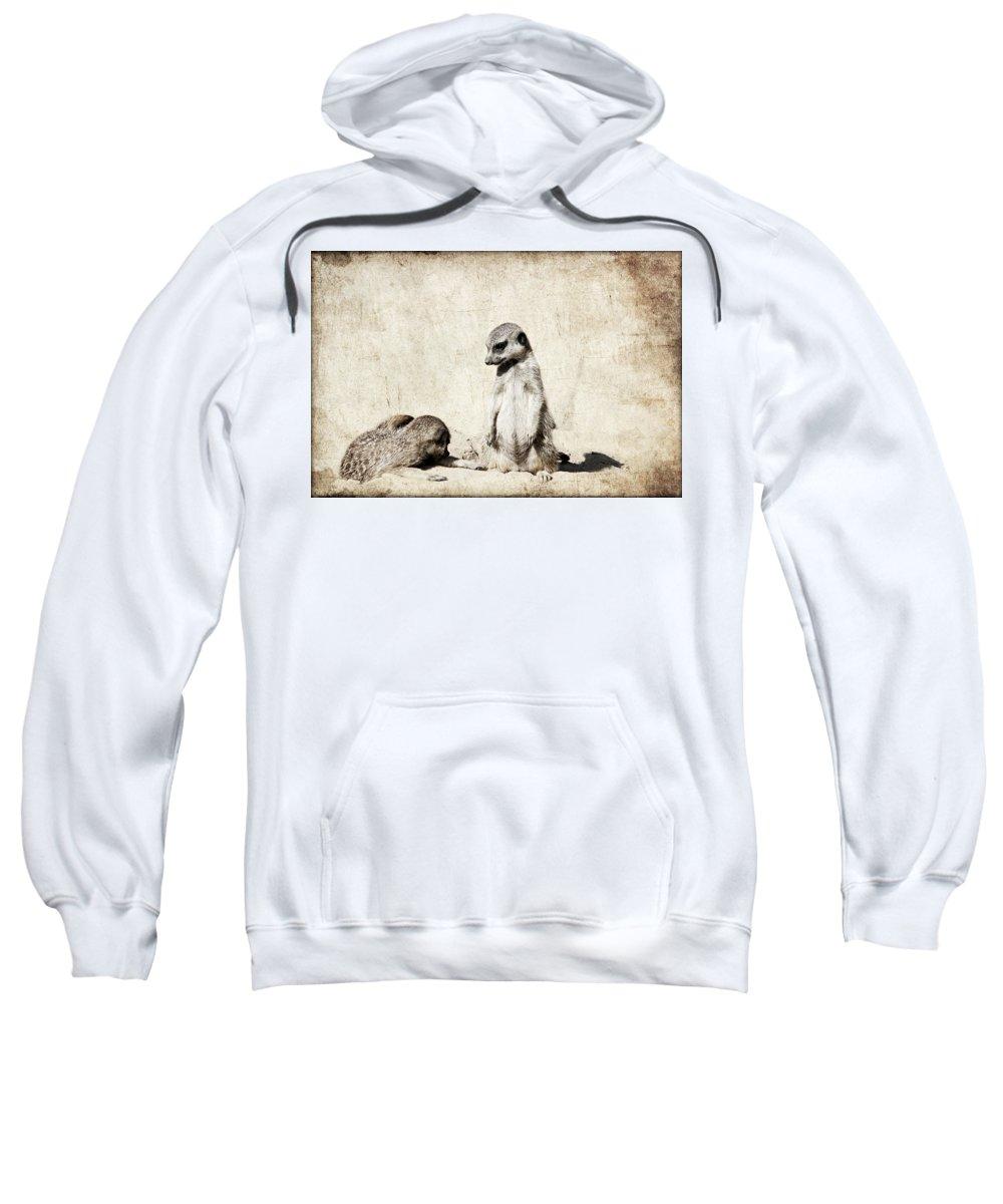 Meerkats Sweatshirt featuring the photograph Meerkatz by Heike Hultsch