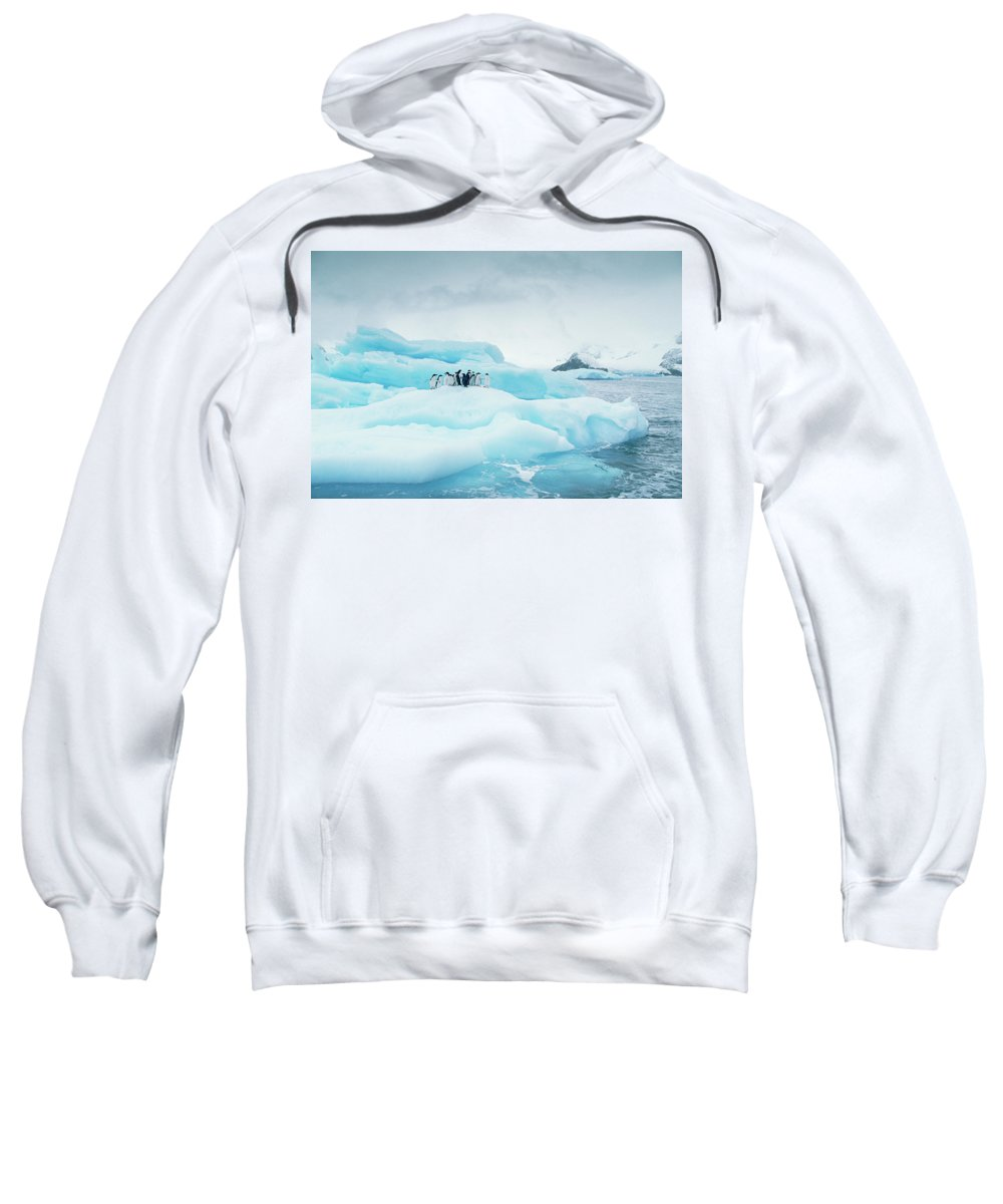 Adelie Penguin Sweatshirt featuring the photograph Adelie Penguins On Iceberg by Gerry Ellis