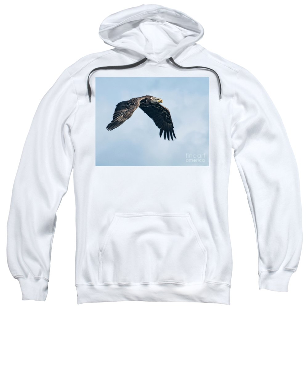 Eagles Sweatshirt featuring the photograph Against The Sky by Claudia Kuhn