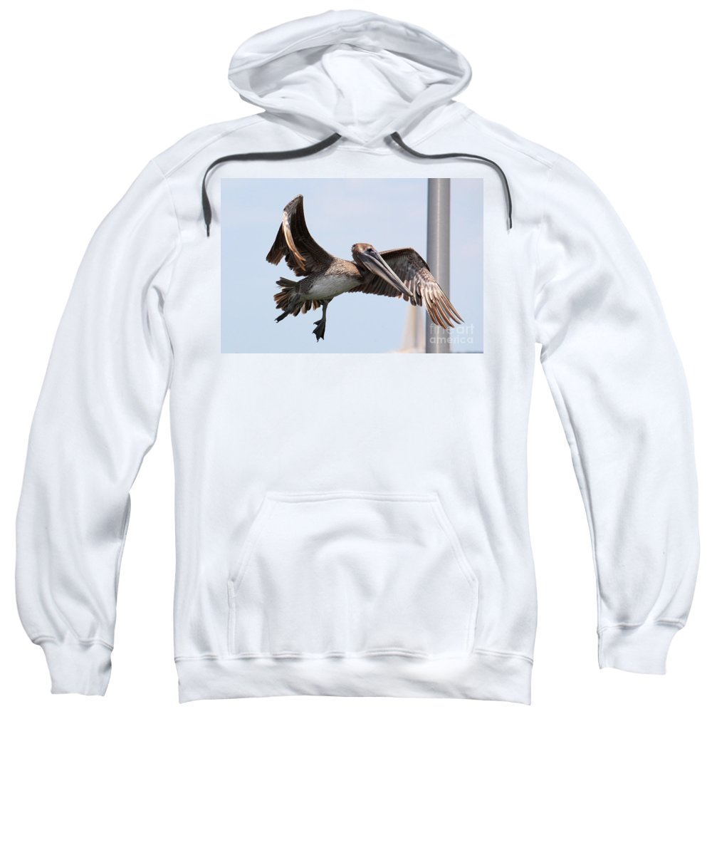 Brown Pelican Sweatshirt featuring the photograph Airborne Brown Pelican by Carol Groenen