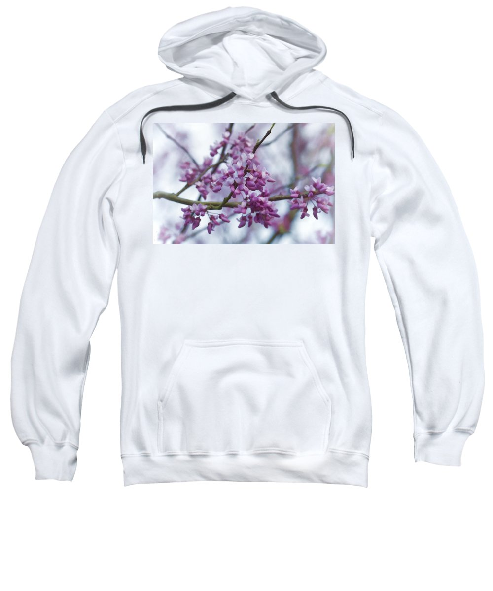 Red Buds Sweatshirt featuring the photograph Alabama Redbuds by Kathy Clark