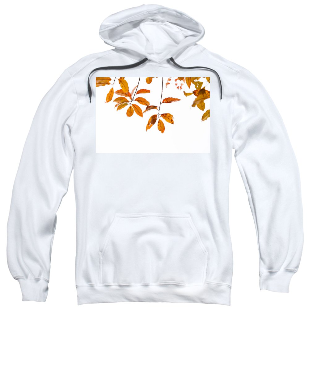 Leaves Sweatshirt featuring the photograph Almost Time by Karol Livote