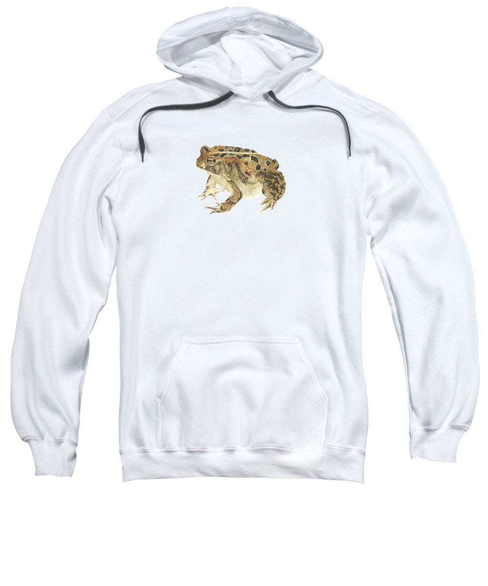 Toad Sweatshirt featuring the painting American Toad by Cindy Hitchcock