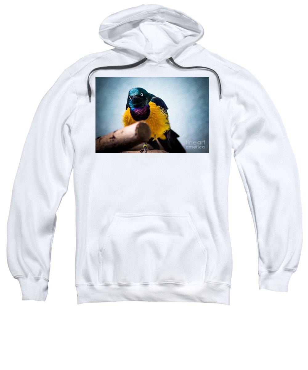 Sunbird Sweatshirt featuring the photograph Angry Sunbird by David Rucker