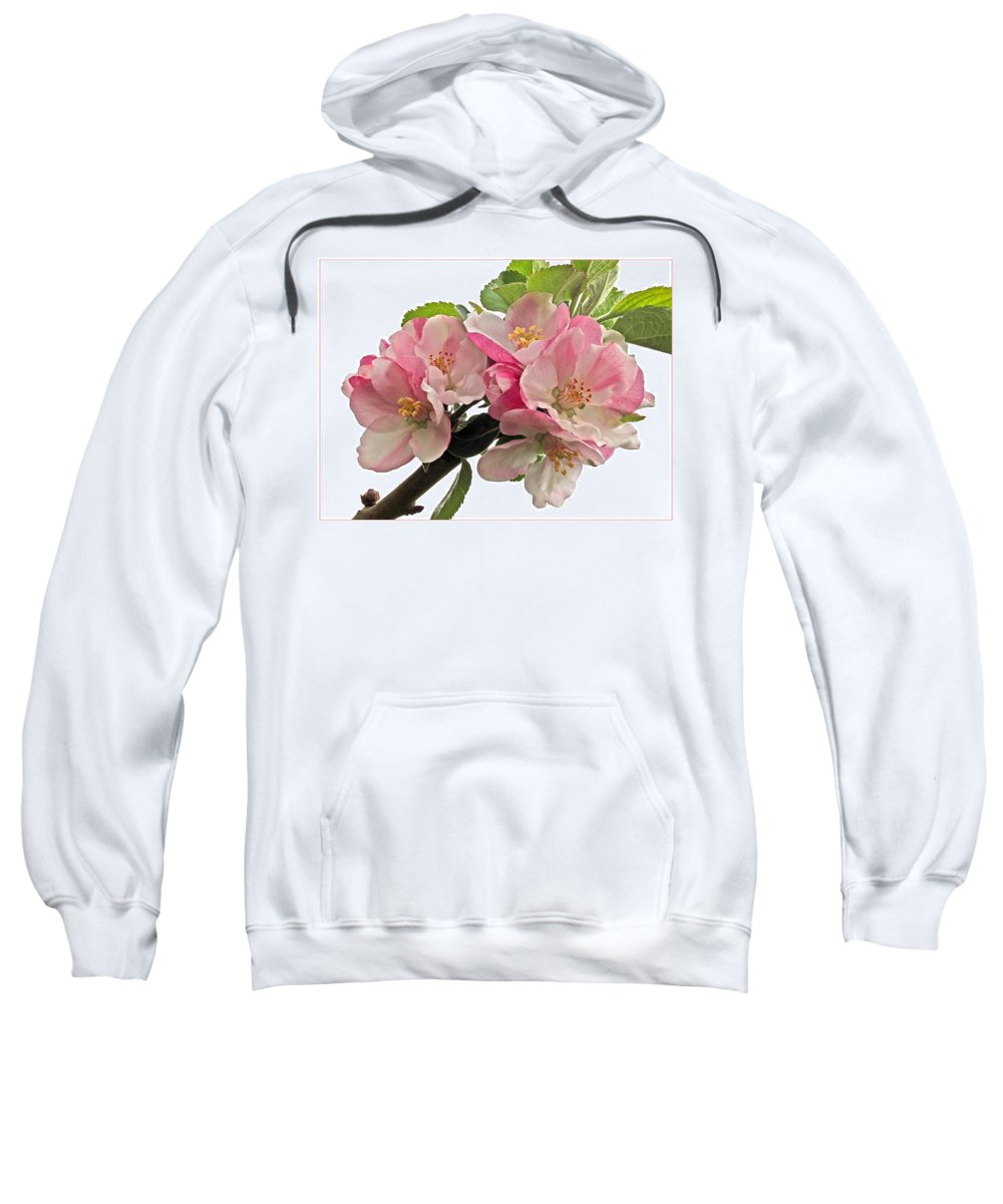 Apple Sweatshirt featuring the photograph Apple Blossom by Gill Billington