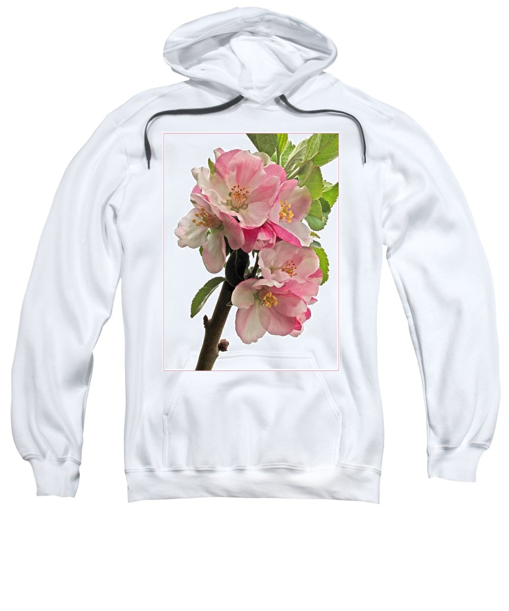 Apple Sweatshirt featuring the photograph Apple Blossom Vertical by Gill Billington